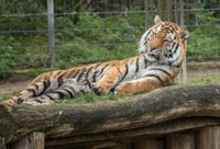 Online_KI04_2021_Story_Kölner_Zoo_1_c_Werner Scheurer.jpg