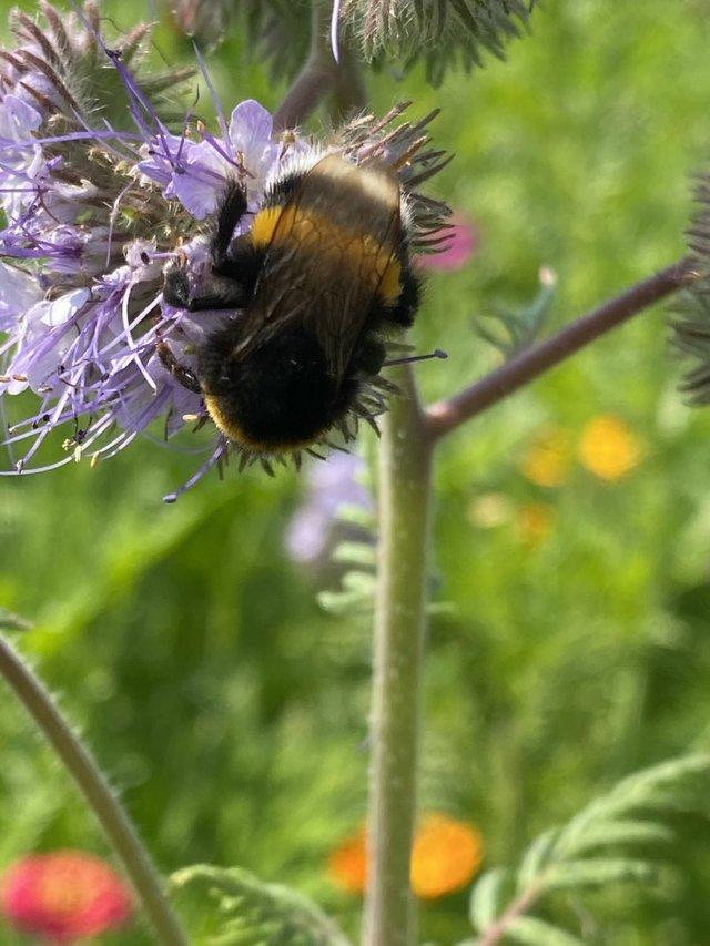 InsektenlehrpfadStammheim_aktiongruen_Credit_SusanneDettmar_8150.JPG